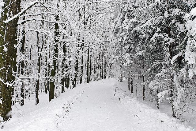 Walking in Winter Wonderland 1- Ing. Robert Schöller