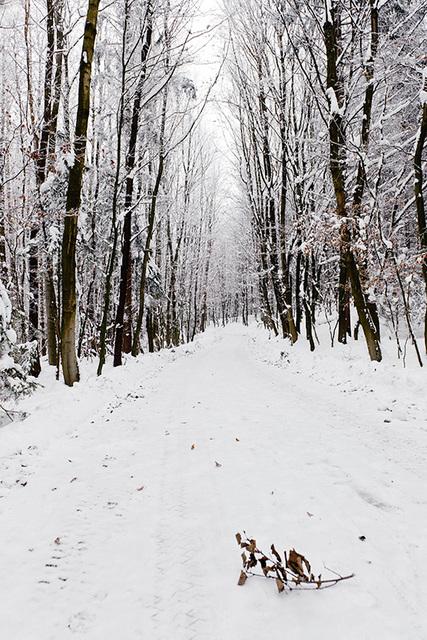 Walking in Winter Wonderland 2 - Ing. Robert Schöller