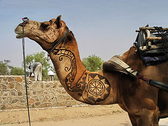 IMG 3305bc Ornate Camel on Thar Desert Road
