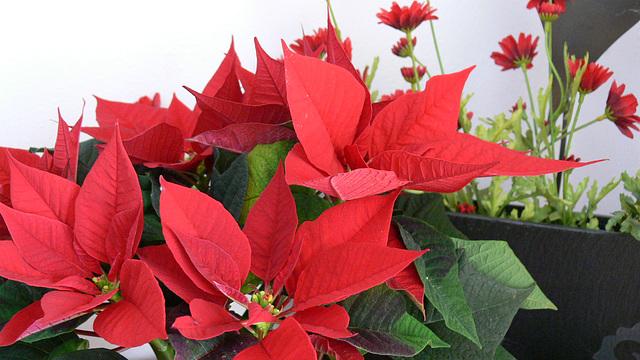 rote Blätter
