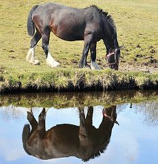 Equine reflections.