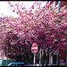 It's spring...