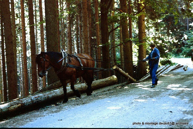 Débardage a cheval