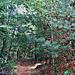 Path up Angel Mountain ..