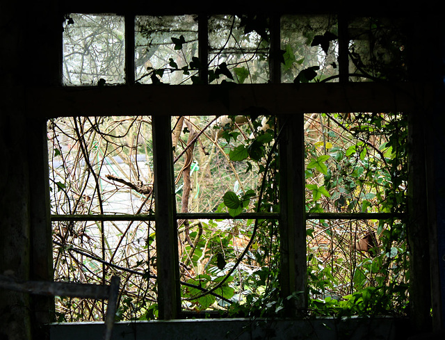 Through the shed window