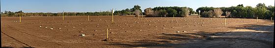 John Doe Graveyard Panorama