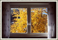 Herbst - aus - blick