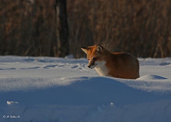 Mon ami Maxou à la chasse