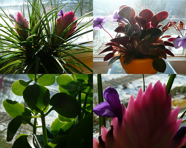Meine Blüten im Wohnzimmer