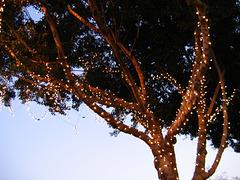 bird trees of mill avenue