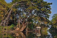 Gorgeous landscape beside Khlong Saen Saep