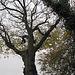 IMG 1671 Alter Baum