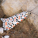 Crimson Speckled Footman moth