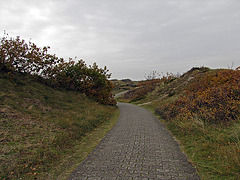 IMG 1711 Dünenweg