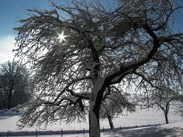 Sonnenstern + Winterzauber