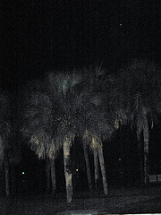 Eerie palms...