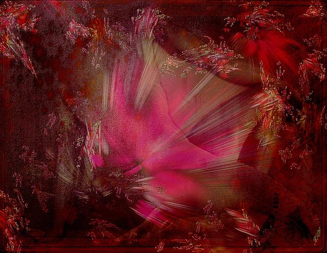 De velours et de soie, de lumière et de rose...