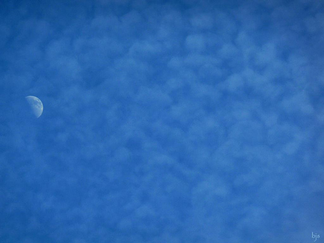 Demi-lune...... en coton