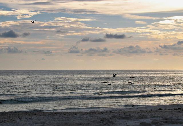 clouds, gulf & pelicans..