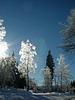 gläserner Wald