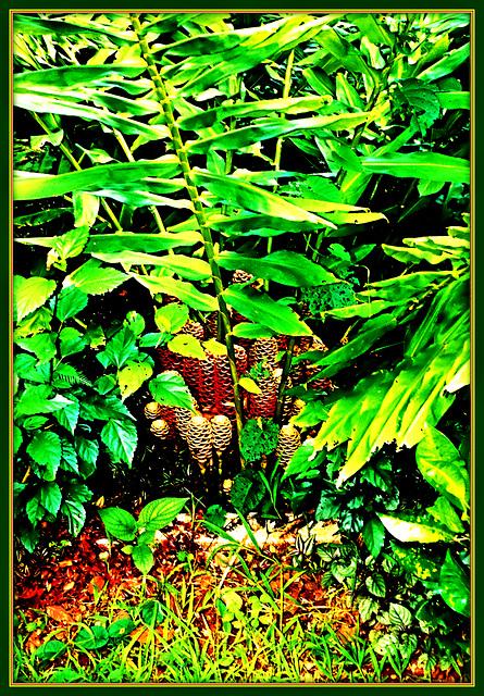 Flora Exotic