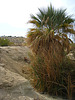 Oasis in Desert Hot Springs (6051)