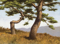 소나무松, 油彩 Pinarboj=Pine Trees, olee sur tolo=oil on canvas, 53x72.7cm(20p), 2008
