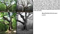 l'arbre des maitres sonneurs