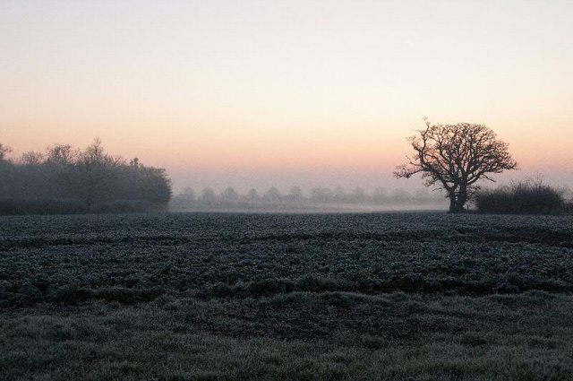 mist on the fields