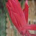 Cactus Flower (0234)