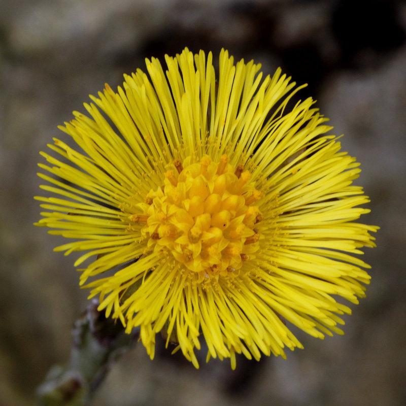 Une fleur par jour.... - Page 2 10180738.513de598.800