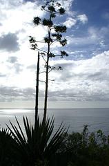 Impression am Atlantik. ©UdoSm