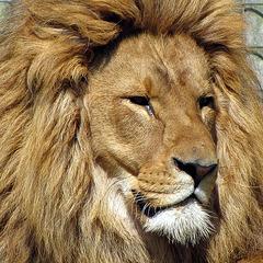 IMG 2244 Löwe von rechts