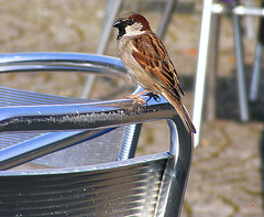 Bird on a chair