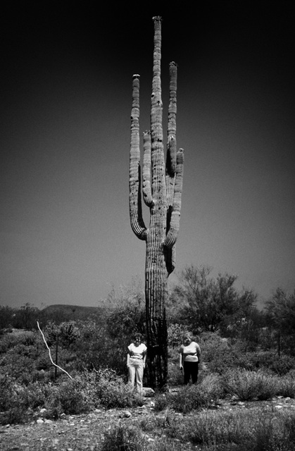 2 girls_kissed_a_cactus