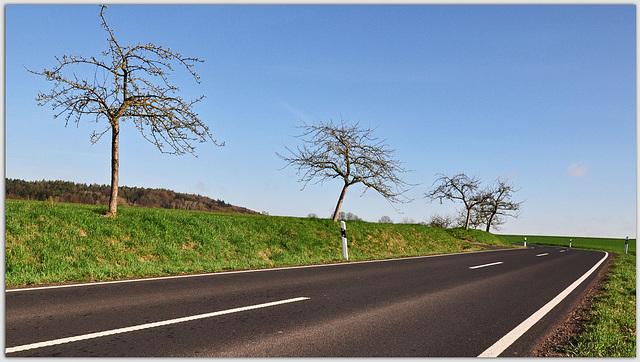 Obstbäume am Straßenrand