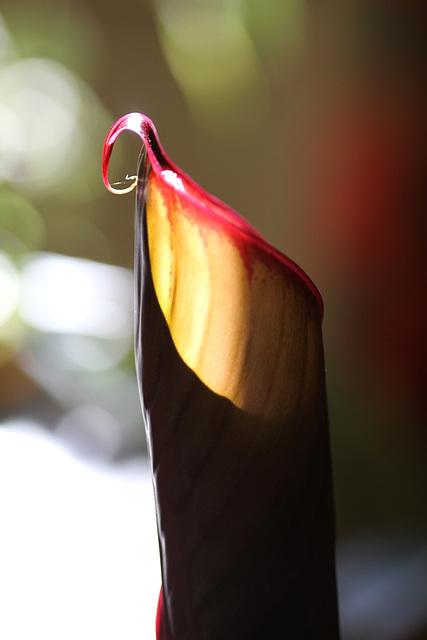 feuille de bananier dans le soleil