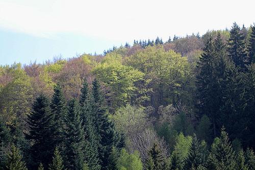 forêt en avril 2