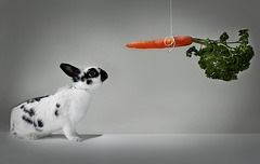 A Rabbit and a Carrot  :o)