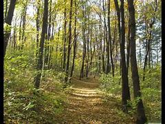 Gryllus Vilmos - Hallgatag erdő