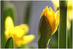 Hallo Frühling ;-)