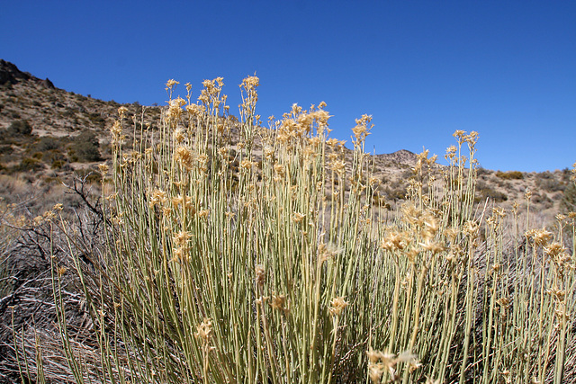 Death Valley National Park - Strozzi Ranch (9529)