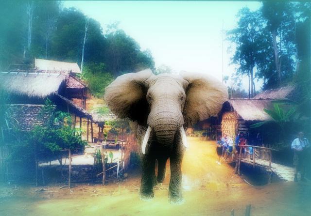 un éléphant sa trompe énormément