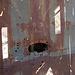 Death Valley National Park - Strozzi Ranch Shotgun Blast (9546)