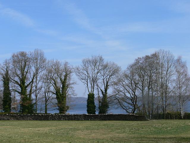 Baumreihe am Starnberger See