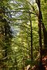 Frühlingswald bei den Buchenegger Wasserfällen