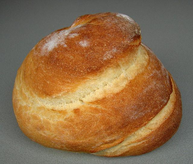 Maisschnecke, Corn Snail