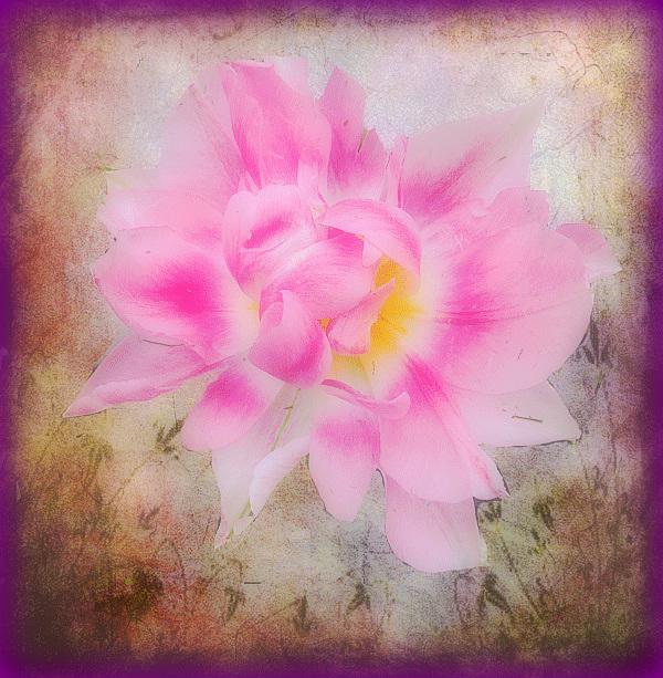 quand je te regarde, je vois la vie en rose