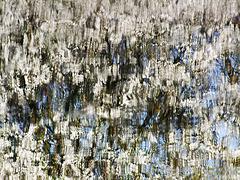 kirschblütenwasser (bis)