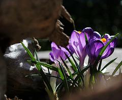Croire encore au printemps....